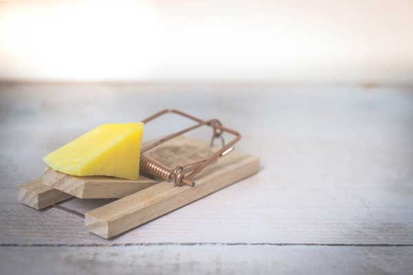 Cheese Food to fight insomina in adults
